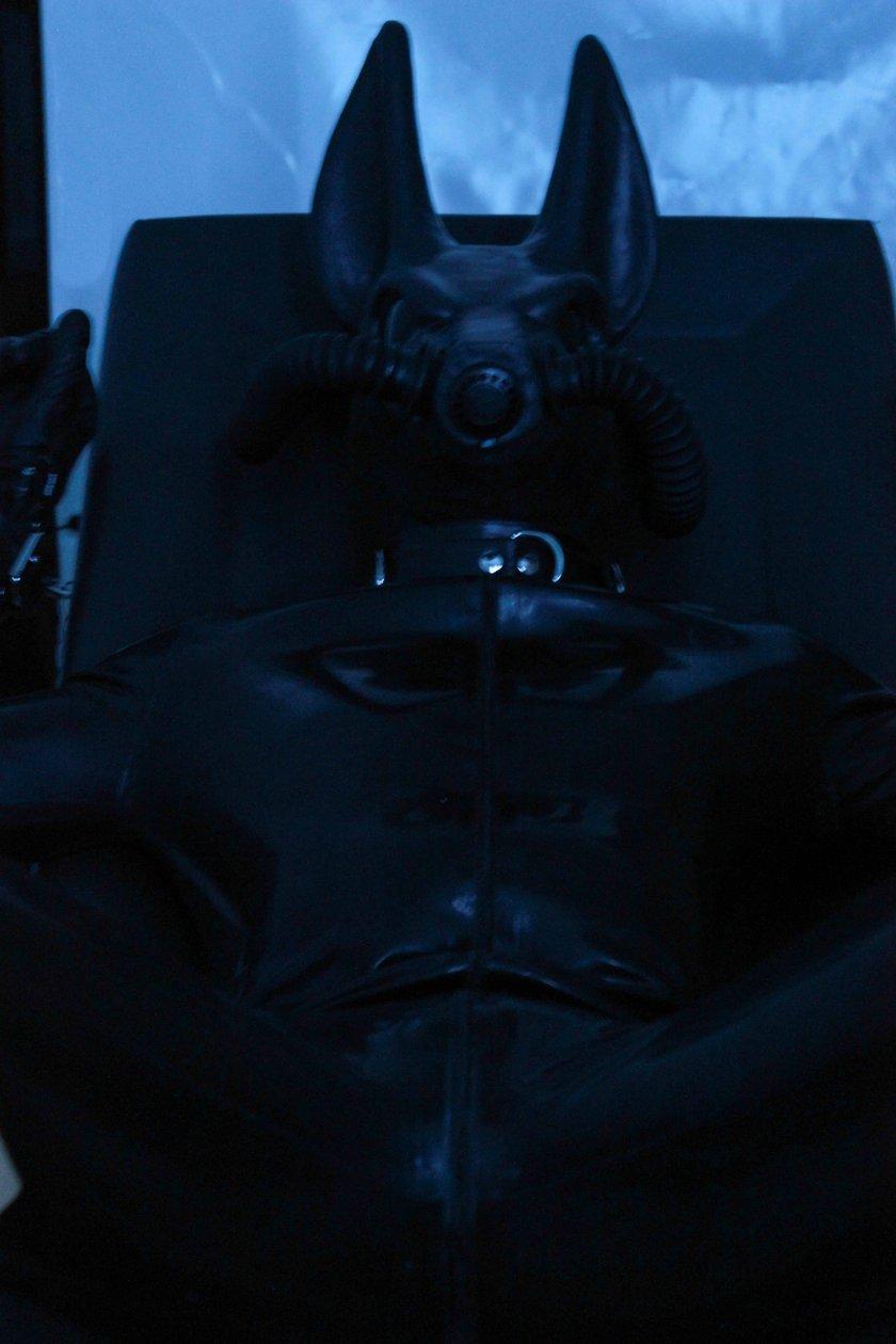 Jackal l In Chair Closeup
