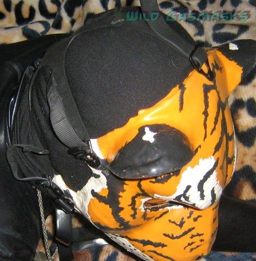KG1 Tiger Back of Ears