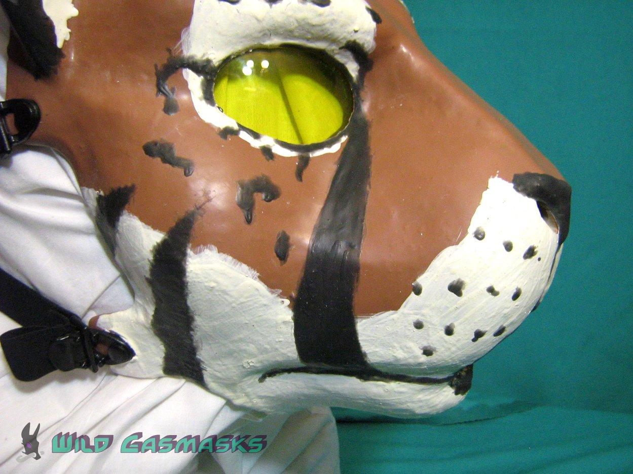 Solomon Tigcelot - Muzzle Detail 1