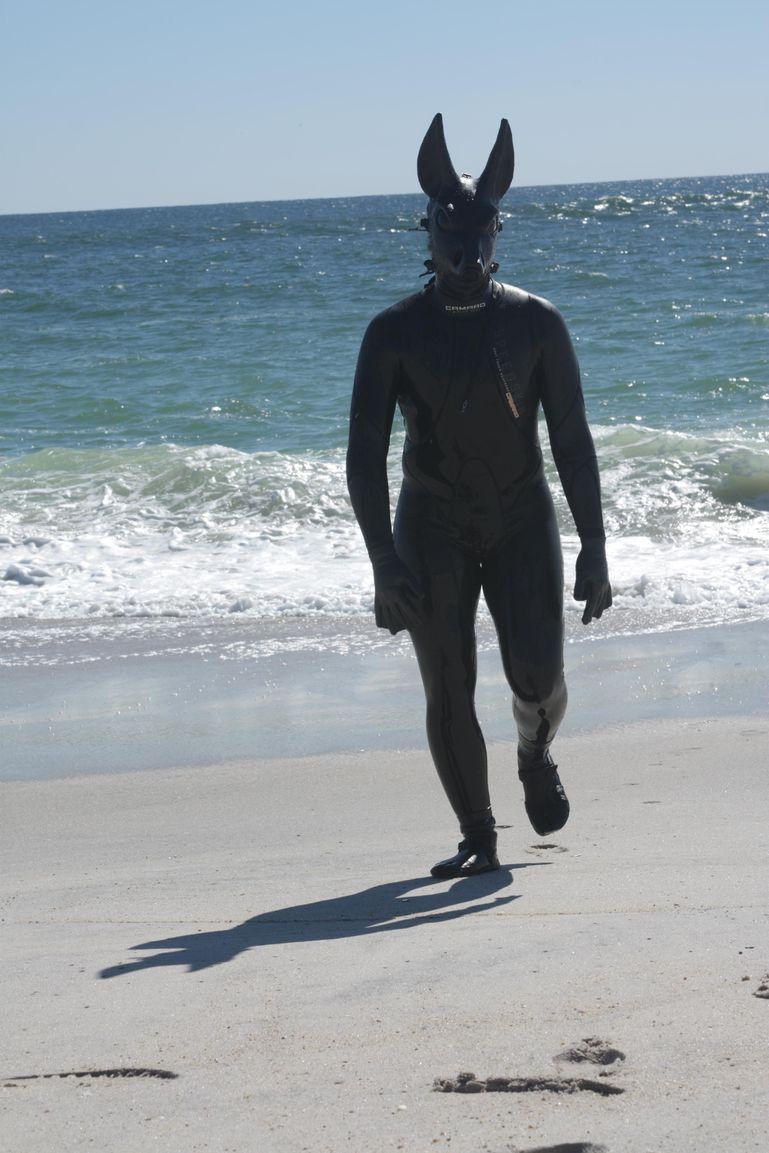 Jack Walking Along the Beach