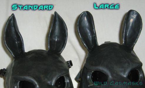 Ear Size Comparison